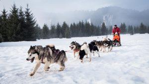 Ride a dog-drawn sleigh