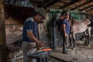 Blacksmith putting on horseshoes