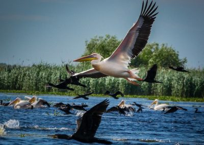 Birds in the Danube Delta