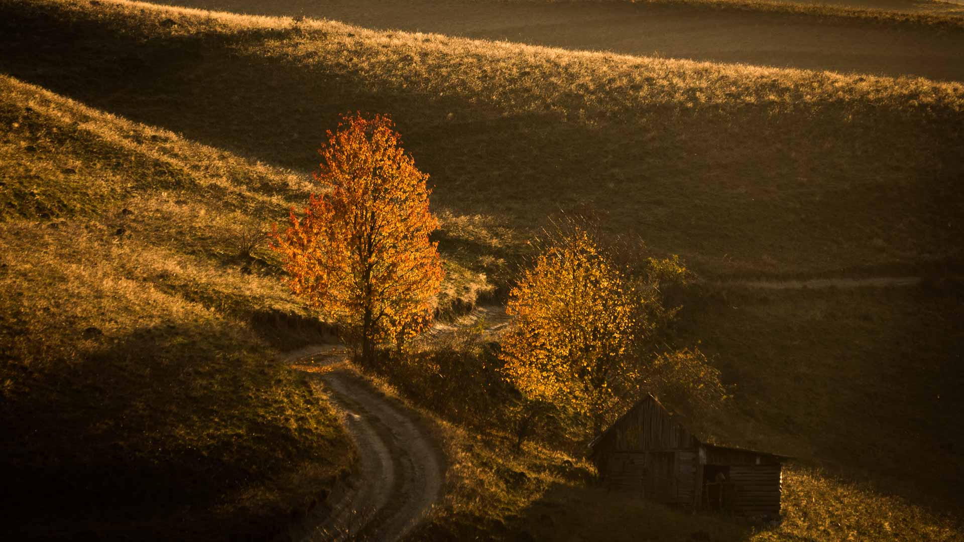 Apuseni area in fall