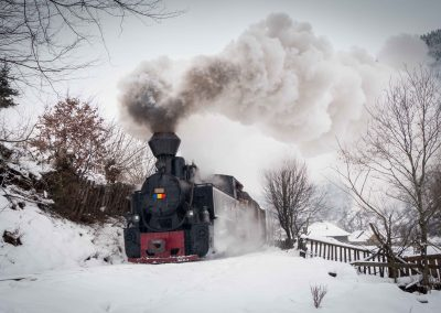 A narrow gauge steam train in Maramures