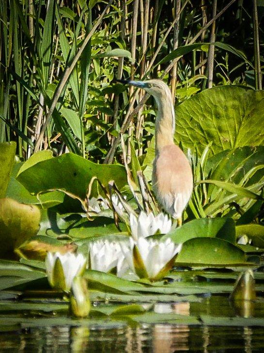 Bird in the Danube
