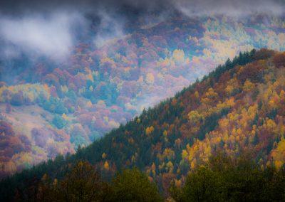 Forest in Fall Sibiu area