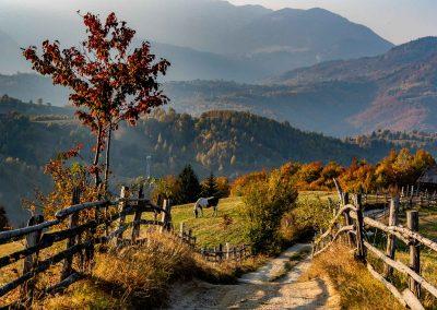 Landscape near Bran in fall
