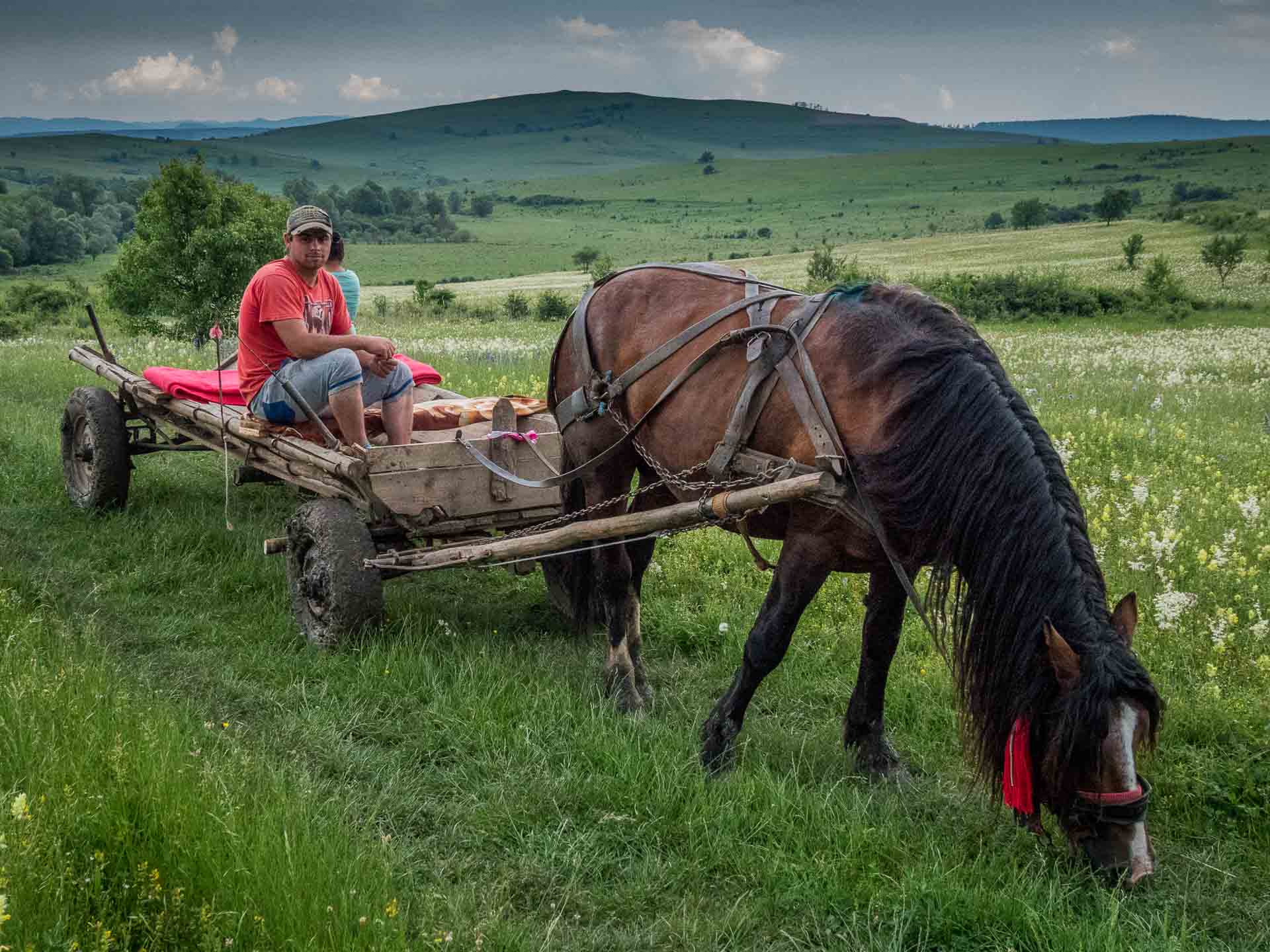 Riding a horse cart in the countryside around Viscri