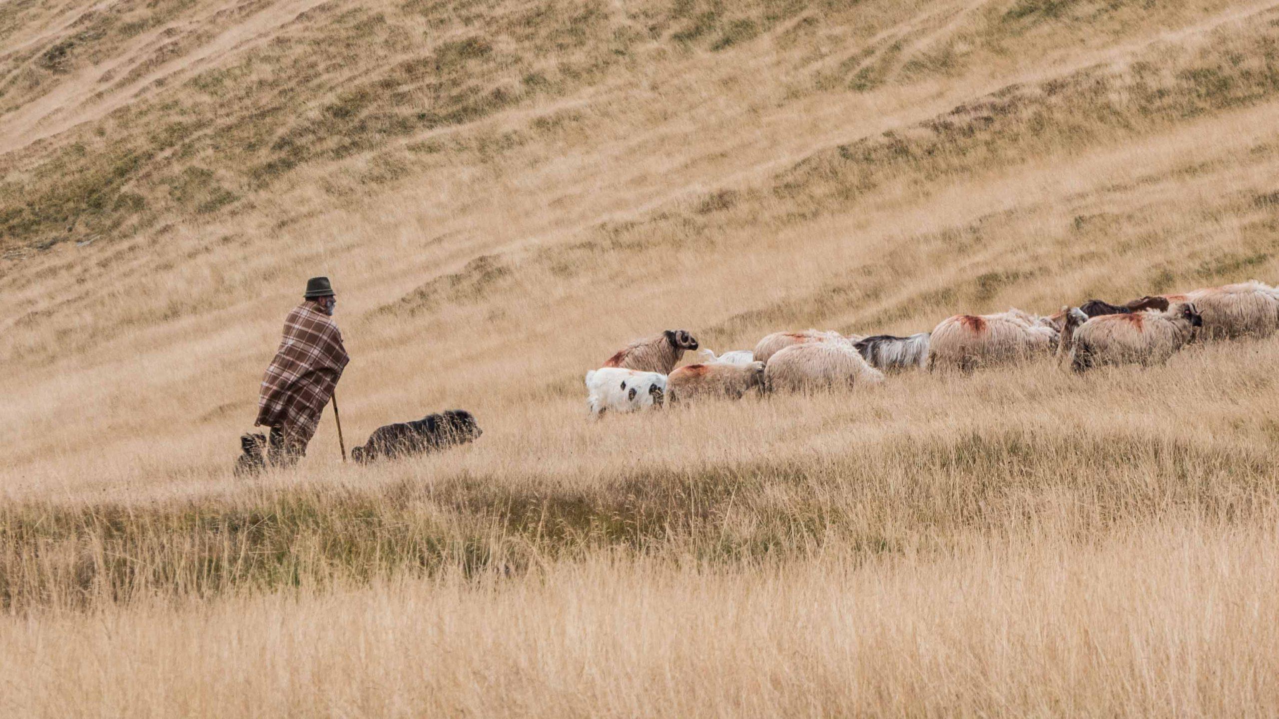 Cu oile la vale