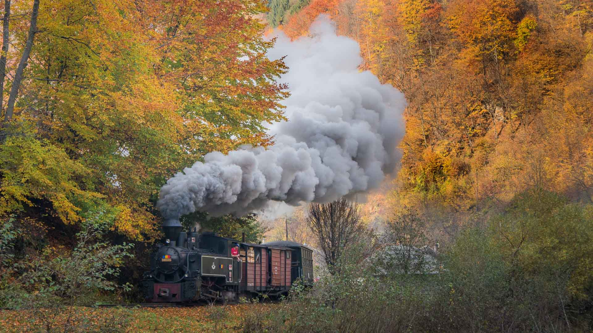 Mocanita Steam Train in Maramures