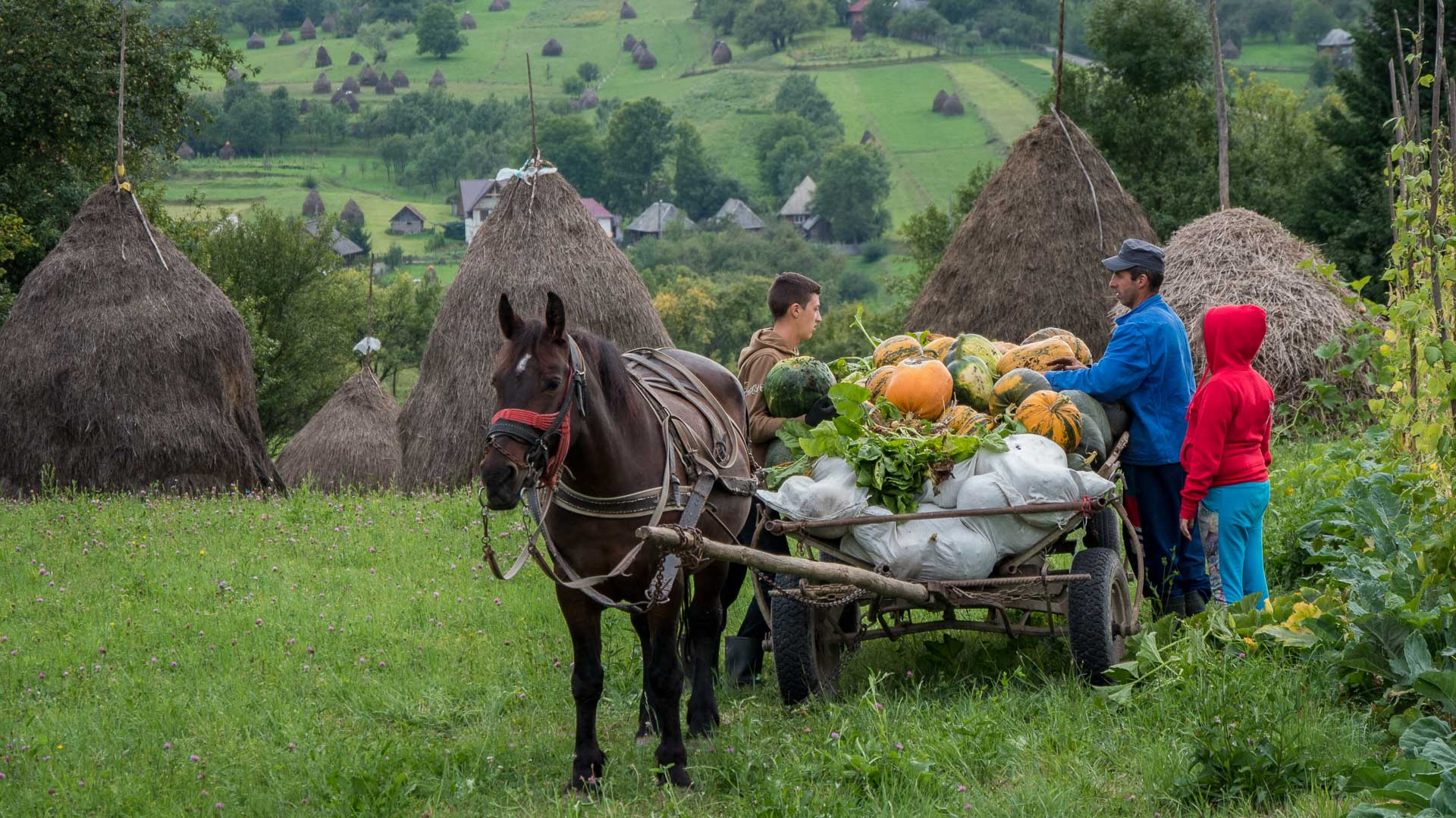 Maramures - traditional life